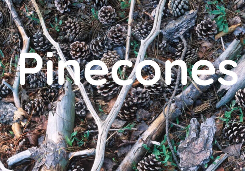 Pine Cone Challenge 1